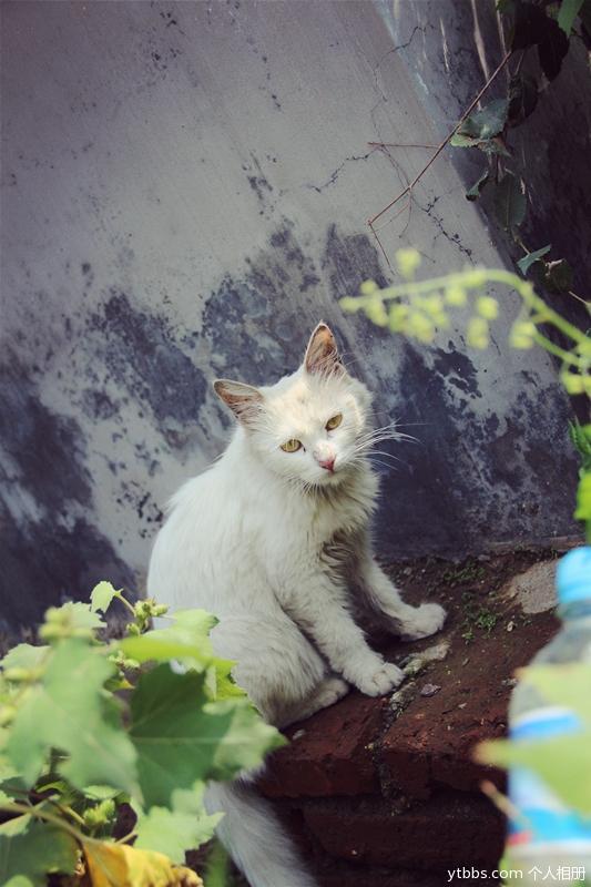 [其它类] 【美丽忆象】厂子里的老大老二与怀孕的大猫与小猫-【多吉的