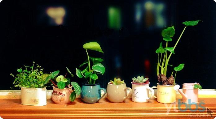 春暖花开晒花晒草,别让你们家的植物藏着了拿出来晒晒吧!精美礼物等你来拿~~