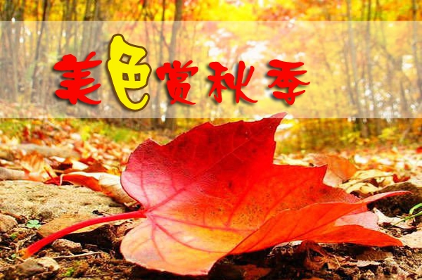 """【自游团】扫""""黄""""小分队已截团,等待我们胜利的喜讯吧!"""