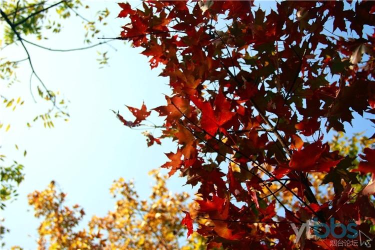 【自由团归来】不虚此行的寒同山~带上一双发现美的眼睛,秋日的风景无处不在