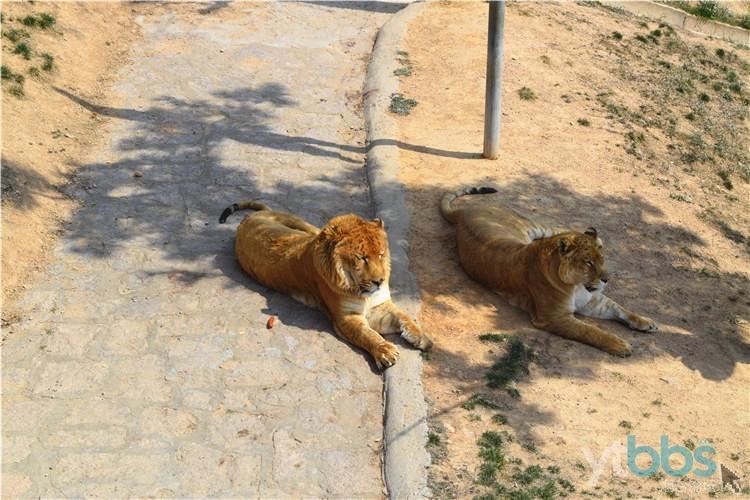 【自游团回顾】为了看动物,我们真的是拼了!西霞口动物园精彩连连看