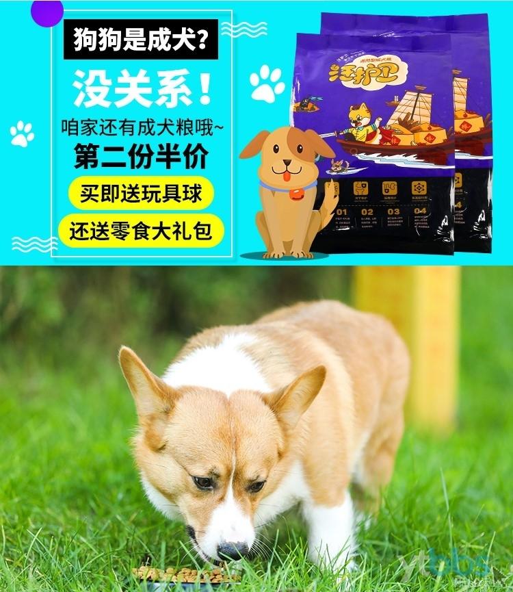 成犬粮图片.JPG