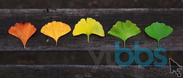 摄图网_500143218_wx_银杏树叶的变化(企业商用).jpg