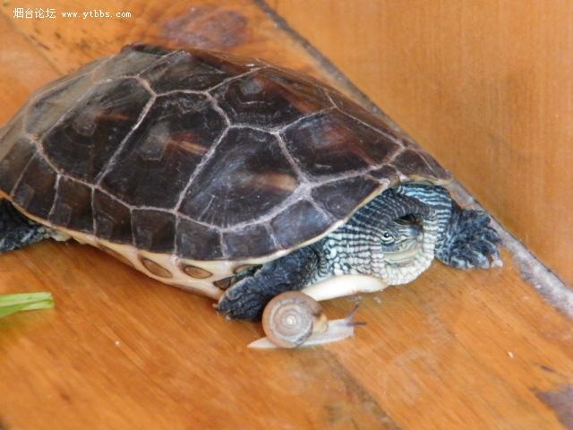乌龟与蜗牛赛跑,究竟谁胜谁负 有图有真相