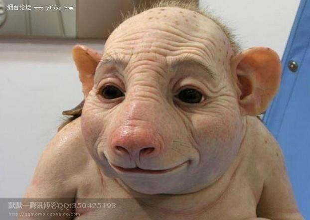 [转载]广西惊现猪人,到底是猪是人?骇世惊俗的