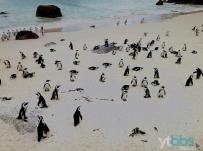 企鹅海滩拍企鹅