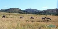 黑白神秘之国《南非》